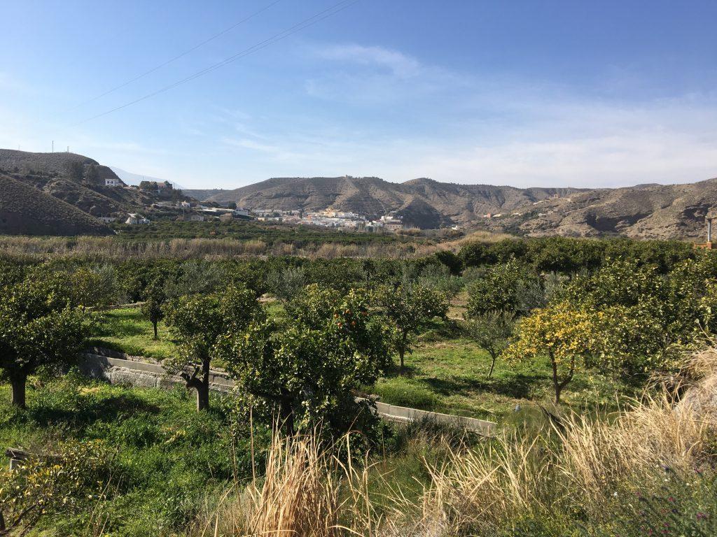 Ein Bild, das Gras, draußen, Berg, Natur enthält.  Automatisch generierte Beschreibung